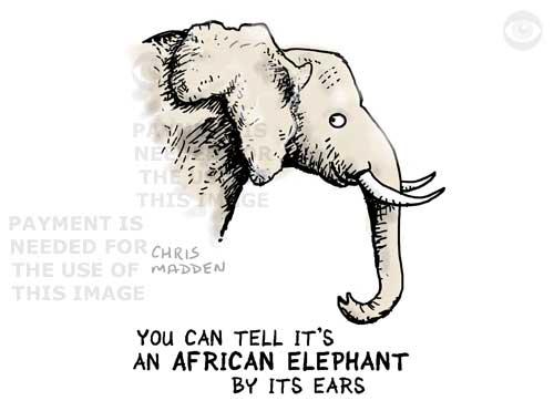 How to recognise an African elephant