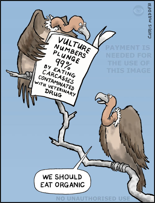 cartoon - vulture extinction