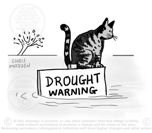 drought flood cat cartoon