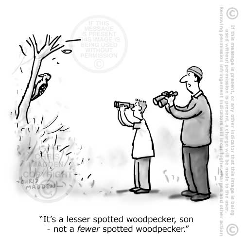 birdwatching cartoon and language cartoon