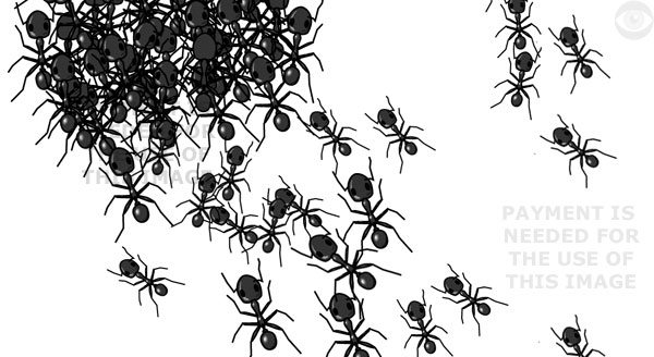Detail of the image above: Ants in a colony forming one large ant